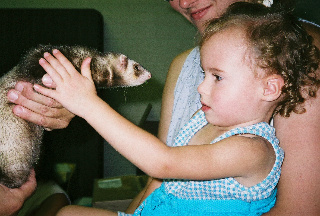 little girl with curly hair with ferret